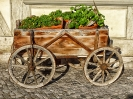 der Blumenwagen